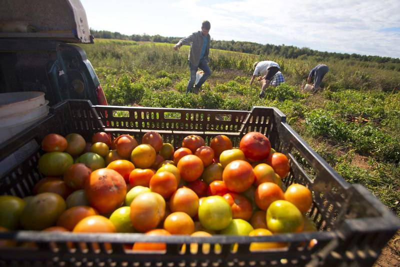 Jamaican farm workers land in Nova Scotia