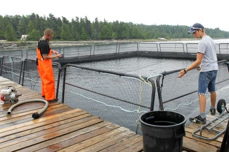 Groups fighting open-pen fish farms form alliance