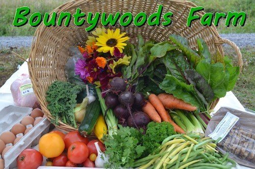 logo of bountywoods farm