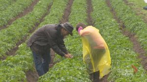 Nova Scotia agrifood groups hail federal support package as a good first step