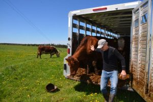Nova Scotians still buying our own beef