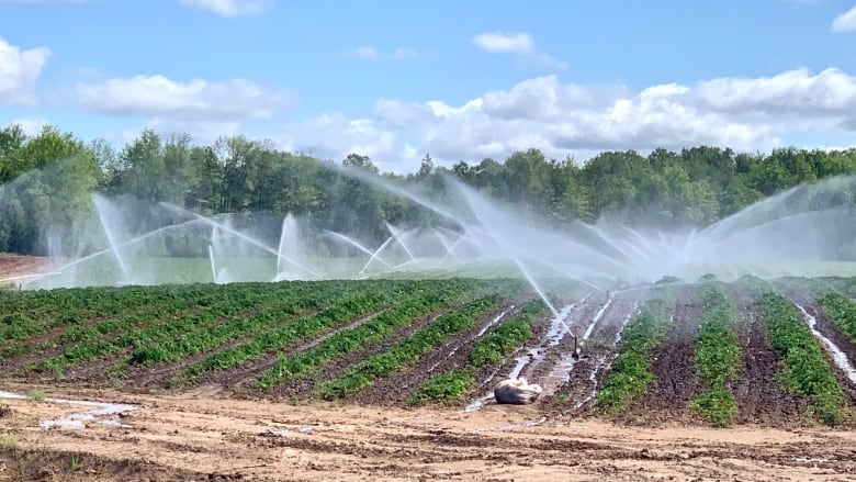 Annapolis Valley farmers scrambling for water during dry summer