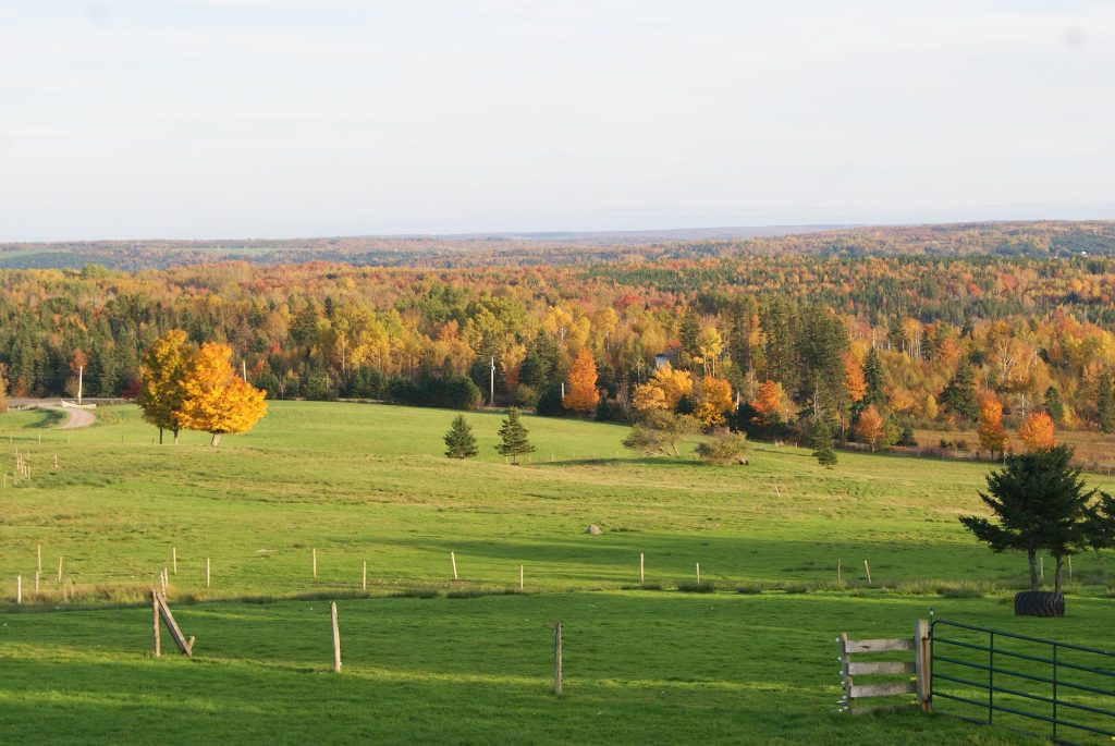 brookridge farm